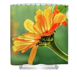 Sunny Side Shower Curtain