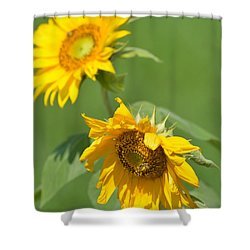 Sunny Side Up 1 Shower Curtain