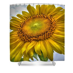 Sunny Side Up Shower Curtain by Charlotte Schafer