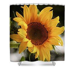Shower Curtain featuring the photograph Sunny Sunflower by Jordan Blackstone