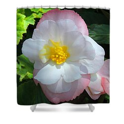 Shower Curtain featuring the photograph Sunny by Teresa Schomig