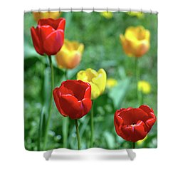 Sunny Tulips Shower Curtain