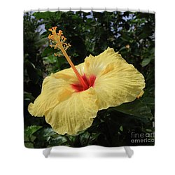 Sunny Yellow Shower Curtain by Mary Haber