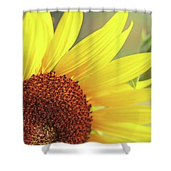 Shower Curtain featuring the photograph Sunny Yellow Sunflower by Jennie Marie Schell