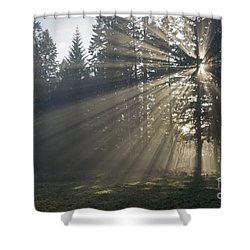 Sunrays Shower Curtain by Inge Riis McDonald