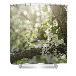Sunrise Blossoms Shower Curtain by Mary Angelini