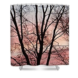 Sunrise Branches Shower Curtain