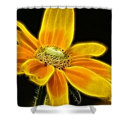 Shower Curtain featuring the photograph Sunrise Daisy by Cameron Wood