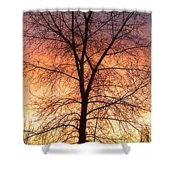 Sunrise December 16th 2010 Shower Curtain by James BO  Insogna