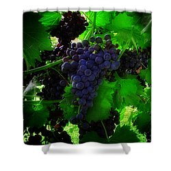 Sunrise In The Vineyard Shower Curtain