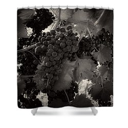 Sunrise In The Vineyard In Black And White Shower Curtain