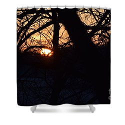 Sunrise In The Woods Shower Curtain