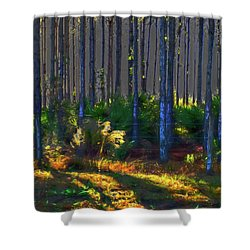 Sunrise On Tree Trunks Shower Curtain