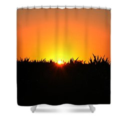 Sunrise Over Corn Field Shower Curtain by Bill Cannon