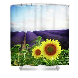 Sunrise Over Sunflower And Lavender Field Shower Curtain by Anastasy Yarmolovich