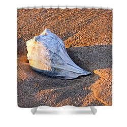Sunrise Seashell Shower Curtain by Allan Levin