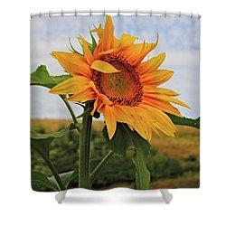 Sunrise Sunflower Shower Curtain by Kathleen Sartoris