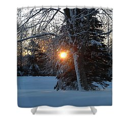 Sunrise Through Branches Shower Curtain