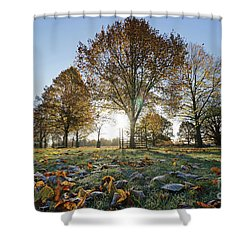 Sunrise Through Lime Trees Shower Curtain