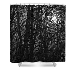 Sunrise Through The Trees Shower Curtain by Diane Diederich
