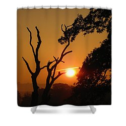 Sunrise Trees Shower Curtain