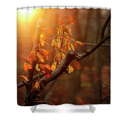 Sunset #8 Shower Curtain