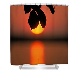 Sunset And Spider Shower Curtain by Thomas Firak