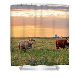 Sunset Cattle Shower Curtain