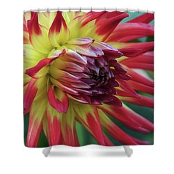 Sunset Dahlia Shower Curtain by Patricia Strand