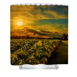Sunset In A North Carolina Tobacco Field  Shower Curtain