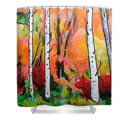 Sunset In An Aspen Grove Shower Curtain