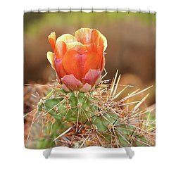 Sunset In The Deserts Shower Curtain