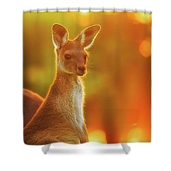 Sunset Joey, Yanchep National Park Shower Curtain by Dave Catley