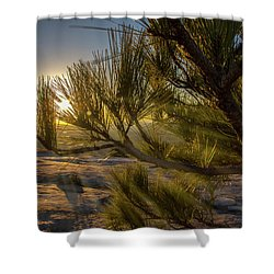 Sunset Pines Shower Curtain