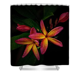 Sunset Plumerias In Bloom #2 Shower Curtain