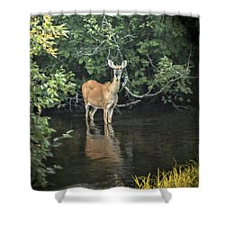 Sunset River Doe Shower Curtain by Judy Johnson