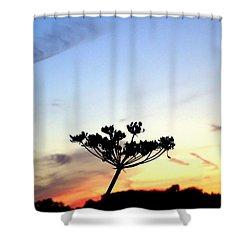 Sunset Seedhead Silhouette  Shower Curtain