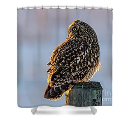 Sunset Short-eared Owl Shower Curtain