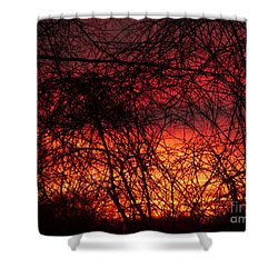 Sunset Through The Tangle Shower Curtain