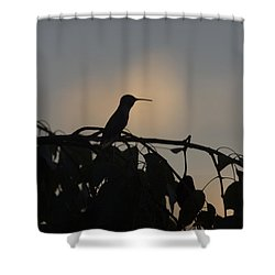 Shower Curtain featuring the photograph Sunset Watcher by Anne Rodkin