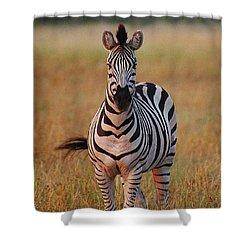 Sunset Zebra Shower Curtain