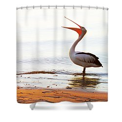 Sunshine Coast Pelican Shower Curtain