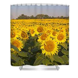 Sunshine Flower Field Shower Curtain
