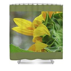 Sunshine In The Garden 9 Shower Curtain by Brooks Garten Hauschild