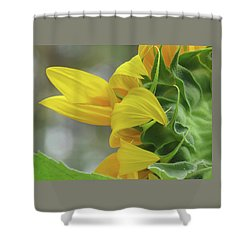 Sunshine In The Garden 9 Shower Curtain by Brooks Garten Hauschild