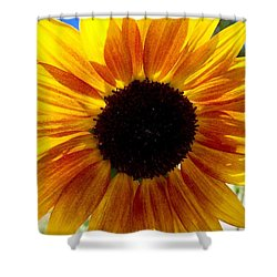 Sunshine Sunflower Shower Curtain by Russell Keating