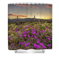 Shower Curtain featuring the photograph Super Bloom Sunset by Peter Tellone