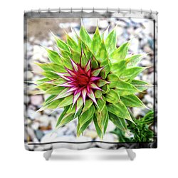 Super Summer Weed Shower Curtain by Robert Clayton