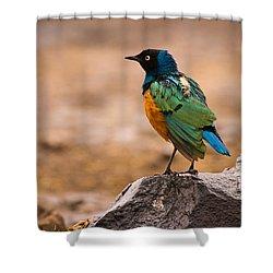 Superb Starling Shower Curtain by Adam Romanowicz