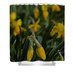 Sure Enough Spring Shower Curtain